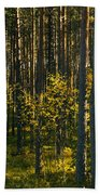 Yellow Autumn Trees In Forest Beach Towel