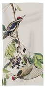 Yellow Bellied Woodpecker Beach Towel
