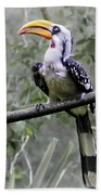 Yellow Billed Hornbill Beach Towel