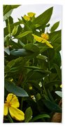 Yellow Poppy Bush Flowers At Pilgrim Place In Claremont-california Beach Towel