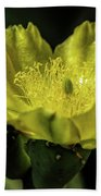 Yellow Cactus Blossom Beach Towel