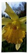 Yellow Daffodils 5 Beach Sheet