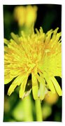 Yellow Dandelion Flower Beach Towel