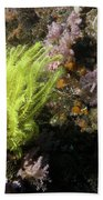 Yellow Feather Star Beach Towel