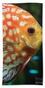 Yellow Fish Profile Beach Towel