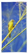 Yellow Fronted Canary Beach Towel