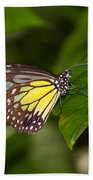 Yellow Glassy Tiger Butterfly Beach Towel