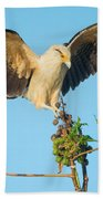 Yellow-headed Caracara Milvago Beach Towel