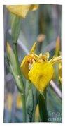 Yellow Iris Wild Flower Beach Towel