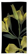 Yellow Lily On Black Beach Towel