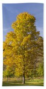 Yellow Maple Tree 1 Beach Towel