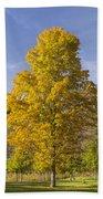 Yellow Maple Tree 1 Beach Sheet