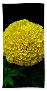 Yellow Marigold Flower On Black Background Beach Towel