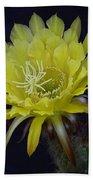Yellow Night Blooming Cactus  Beach Towel