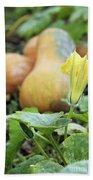 Yellow Pumpkin Flower Closeup Garden Autumn Season Beach Towel