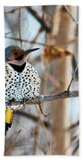 Yellow-shafted Northern Flicker Staying Warm Beach Towel