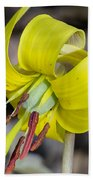 Yellow Trout Lily Beach Towel