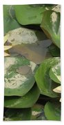 Yellow Water Lillies Beach Towel