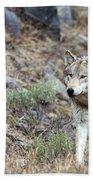 Yellowstone Grey Wolf Beach Towel