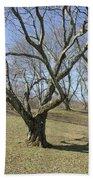 Yellowwood Tree In Winter Beach Towel