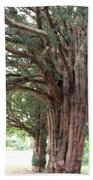 Yew Tree Entrance Beach Towel