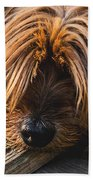 Yorkshire Terrier Biting Wood Beach Towel