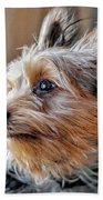 Yorkshire Terrier Dog Pose #2 Beach Towel