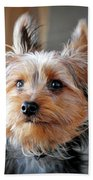 Yorkshire Terrier Dog Pose #3 Beach Towel