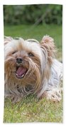 Yorkshire Terrier Is Smiling At The Camera Beach Towel