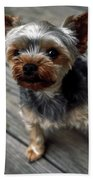 Yorkshire Terrier Puppy Beach Towel
