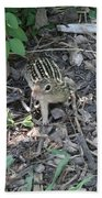 You There - Ground Squirrel Beach Towel