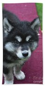 Young Alusky Puppy Standing On A Teeter Totter Beach Towel
