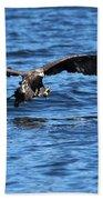 Young Bald Eagle I Beach Towel