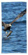 Young Bald Eagle II Beach Towel