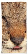 Young Bobcat Portrait 01 Beach Towel