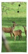 Young Buck With Two Does In The Meadow Beach Towel