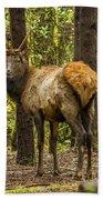 Young Bull Elk Beach Towel