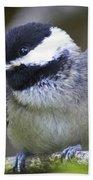 Young Chickadee  Beach Towel