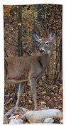 Young Deer Beach Towel