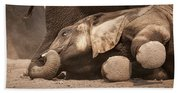 Young Elephant Lying Down Beach Towel