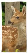 Young Fawn Beach Towel