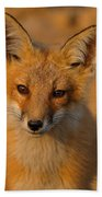 Young Fox Beach Towel by William Jobes