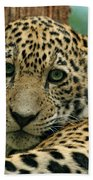 Young Jaguar Beach Towel