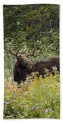 Young Male Moose Beach Towel