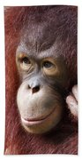 Young Orang Utan Looking Thoughtful Beach Towel