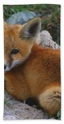 Young Red Fox Beach Towel
