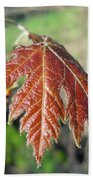 Young Red Maple Leaf In May Beach Towel
