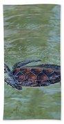 Young Sea Turtle Beach Towel