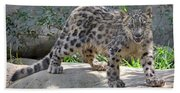 Young Snow Leopard Beach Towel