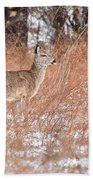 Young White-tailed Deer In The Snow Beach Towel
